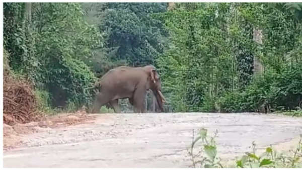Wild Elephants Walked In Mudigere Taluk