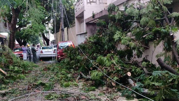 Around 150 Complaints of Fallen Tree , Branches Received By The BBMP Control Room Today In Bengaluru