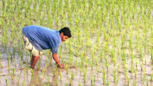 Interest Free Loan For Farmers From Rang De