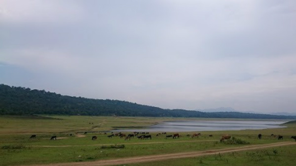 Elephant Camp Start In The Backwaters Of Harangi Reservoir