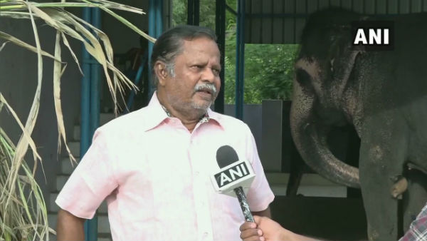 No Religious Function Big Loss For Elephant Owners