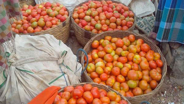 Due To Supply Shortage: Tomato Prices Rs 50-60/Kg In Delhi