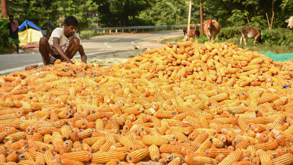 Seed Production And Opportunities For Farmers In India
