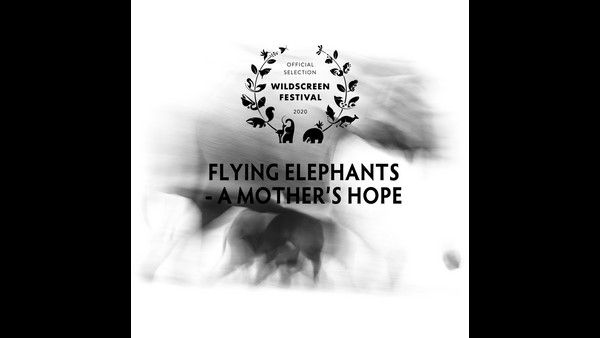 Wildscreen Film Festival 2020: Flying Elephants Film Nominated
