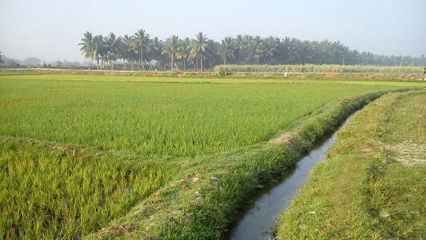 Narasingaraya Compromised Yalagireppa To Provide Water To Crops