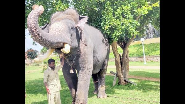 ಮೈಸೂರು ದಸರಾ 2020: ಅರ್ಜುನನ ಉತ್ತರಾಧಿಕಾರಿಗೆ ಹುಡುಕಾಟ?