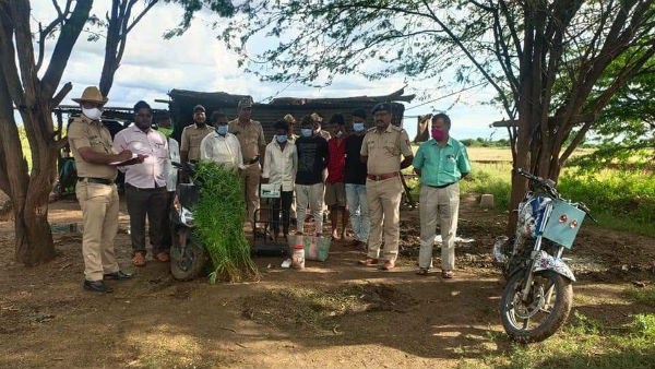 Gadag: Police Arrested Five For Involving In Growing And Selling Of Marijuana