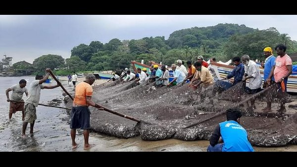 Karwar: Fishermen Got Plenty OF Fishes Today At Ravindranath Beach