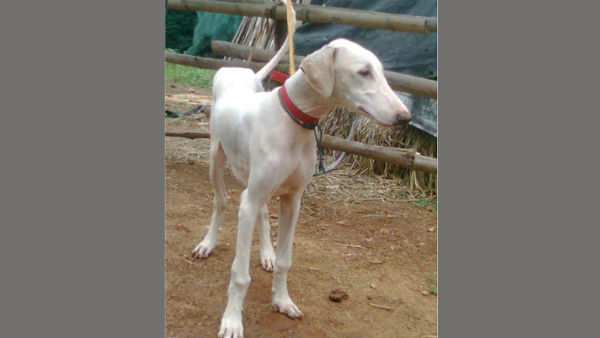 BSF To Induct Mudhol Dog On October 17