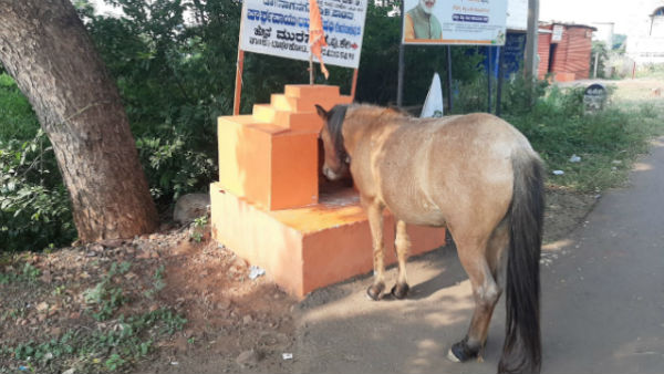 Bagalkot: Horse offers Prayer infront of Anjaneya Temple; Video Goes viral