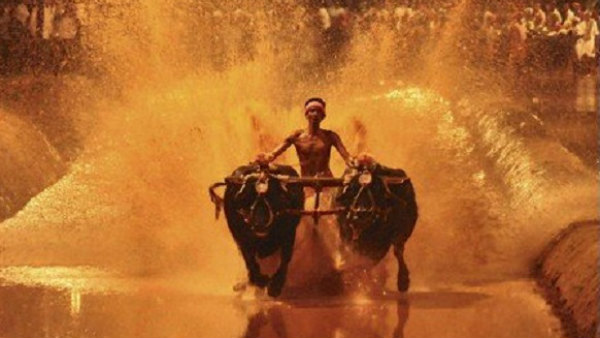 Mangaluru: Decision Of Organizing Kambala Depends On Next Guidelines Of Central Government