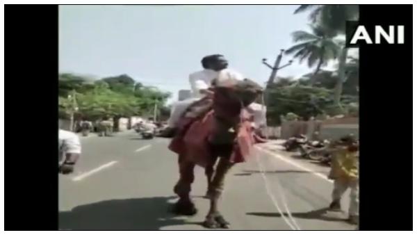 ಆಂಧ್ರ ಪ್ರದೇಶ:ಒಂಟೆ ಏರಿ ತೈಲ ಬೆಲೆ ಏರಿಕೆ ವಿರುದ್ಧ ಪ್ರತಿಭಟನೆ ನಡೆಸಿದ ಮಾಜಿ ಸಂಸದ