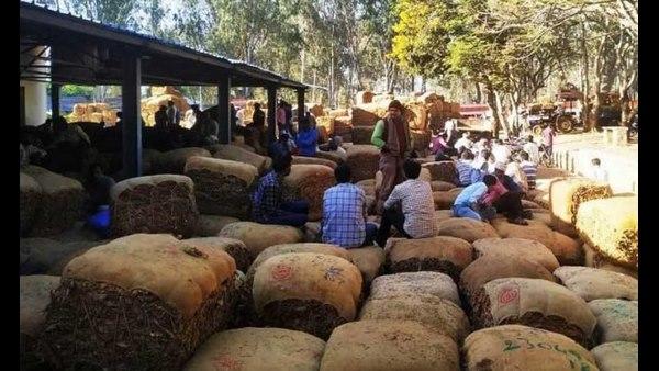 ಮೈಸೂರು: ಕಡಿಮೆ ಬೆಲೆಗೆ ತಂಬಾಕು ಮಾರಿ ಕೈ ಸುಟ್ಟುಕೊಂಡ ರೈತರು