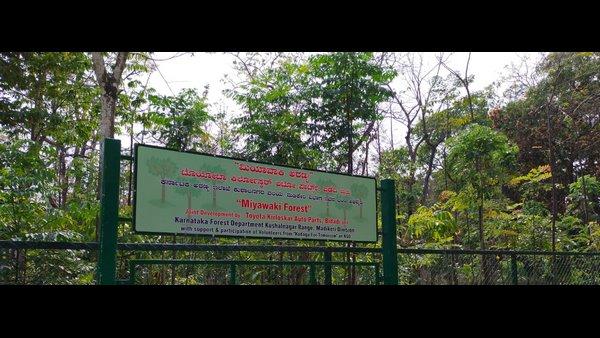 ಕೊಡಗು: ಭೂಕುಸಿತ ತಡೆಗೆ ಮಿಯಾವಕಿ ವನ ನಿರ್ಮಾಣ