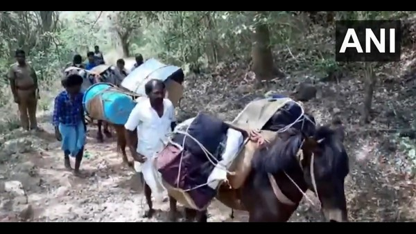 Donkeys Carry EVMs To Polling Booths In Erode, Dharmapuri And Dindigul: Viral Video