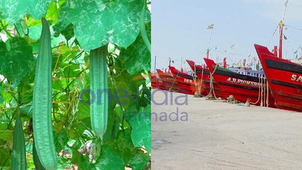 ಲಾಕ್ಡೌನ್ ಎಫೆಕ್ಟ್: ದ.ಕ ಜಿಲ್ಲೆಯಲ್ಲಿ ನೆಲಕಚ್ಚಿದ ತರಕಾರಿ, ಮೀನುಗಾರಿಕಾ ಉದ್ಯಮ