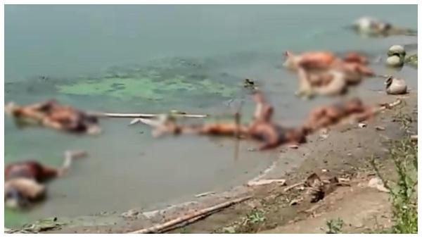 ಗಂಗಾ ನದಿಗೆ ಶವಗಳನ್ನು ಎಸೆದಿದ್ದು ಅಂಬ್ಯುಲೆನ್ಸ್ ಚಾಲಕರು