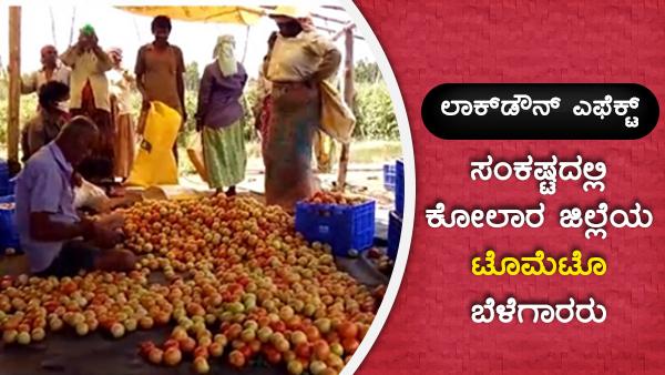 ಲಾಕ್ಡೌನ್ ಎಫೆಕ್ಟ್: ಸಂಕಷ್ಟದಲ್ಲಿ ಕೋಲಾರ ಜಿಲ್ಲೆಯ ಟೊಮೆಟೊ ಬೆಳೆಗಾರರು