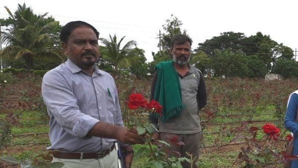 ನರೇಗಾ ನೆರವಿನಲ್ಲಿ ಗುಲಾಬಿ ಬೆಳೆದು ಲಾಭಗಳಿಸಿದ ರೈತ