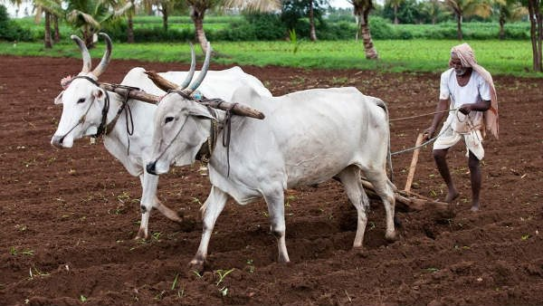 ಮುಂಗಾರು ಹಂಗಾಮಿನ ರೈತರ ಬೆಳೆ ಸಮಿಕ್ಷೆ ಆ್ಯಪ್ ಬಿಡುಗಡೆ