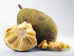 Encouraging Jackfruit Farmers Gkvk Conducts Two Days Lse
