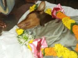 Dog Stabbed To Death While Saving Master In Mumbai