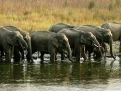 Elephant Census Starts In Karnataka From 19th May
