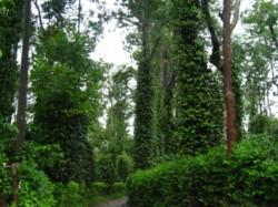 Ready To Buy Coffee Estate In Western Ghats Sakaleshpur