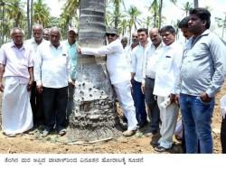 Why Vatal Nagaraj Hug Cocount Tree