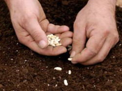Seed Sowing Campaign Organised In Aadu Malleshwara In Chitradurga