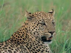 Leopard Attacked On Bike Rider In Tirthahalli Taluk