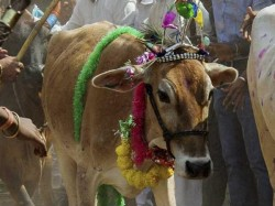Ban On Cattle Slaughter Sc To Hear Plea On June