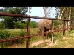 Barricades Around Elephant Reserve Forest Near Gundlupete
