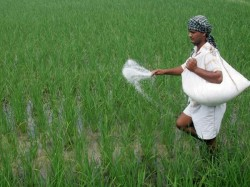 Government Lowers Gst On Fertilisers Just Ahead Of Launch