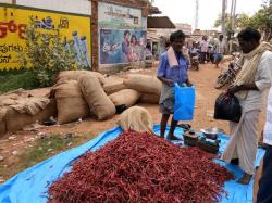 Ballari Dry Chili Available At Half Price In Srinivasapura