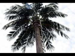It S A Mobile Tower Not Coconut Tree