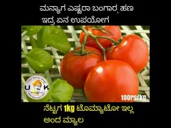 Tomato Price Hiked Including Social Media Jokes