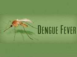 South India Including Karnataka Worst Hit As Dengue Spreads Its Tentacles