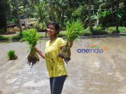 Agnes College Girls Enjoy Plantation At Paddy Fields Near Someshwara Temple