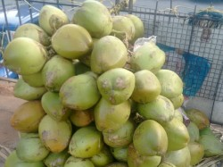 Hassan District Administration Plans To Tender Coconut During Mahamastakabhisheka