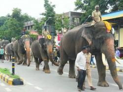 Mysuru Dasara Elephants Practice Starts From Saturday