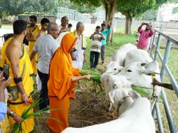Malnad Cow Milk Will Be Used For Tirupati Balaji Abhishekha