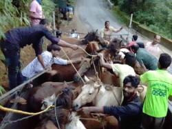 Charmadi Ghat Witness Traffic Jam Due Horses