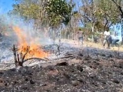 Chikkamagaluru Many Acres Forest Burnt Charmadi Ghat Wild Fire