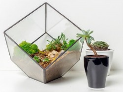 Project Eve Is Conducting An Exclusive Terrarium Workshop