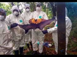 Nipah Threat In Kerala Shimla Striving For Drinking Water