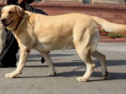 State Govt Approves Bbmp Policy On Puppy Raising