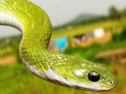 World Snake Day Viral Videos Of Snakes