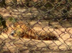 Two New Attraction In Binkadaokatti Zoo In Gadag