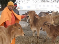 Uttar Pradesh Government To Build Gaushala In Prison